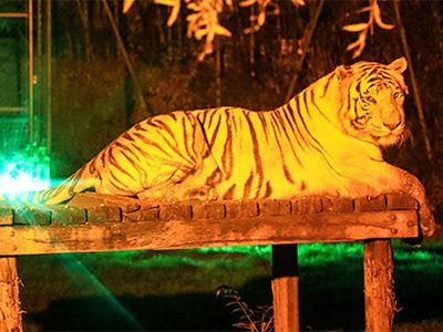 Soirée au Zoo